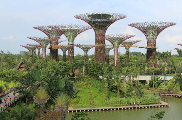 Tree-like buildings at Gardens by the Bay, Singapore (credit: Shiny Things/CC BY-NC 2.0)